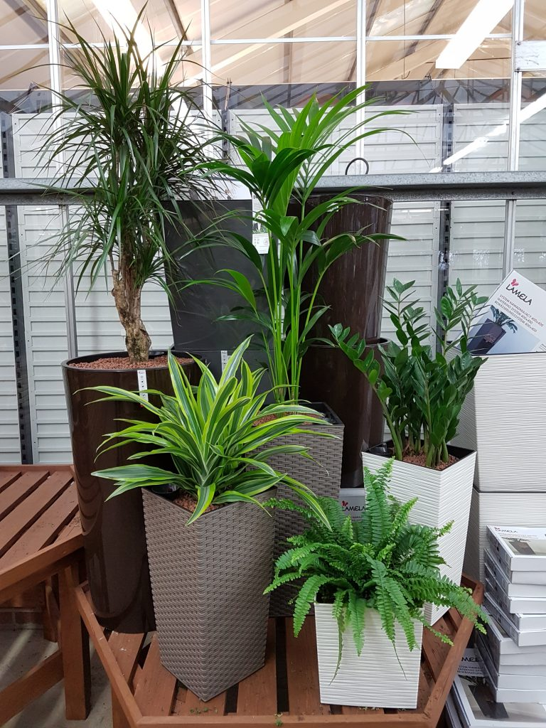 House Plants for Sale at Dean\'s Garden Centre in York