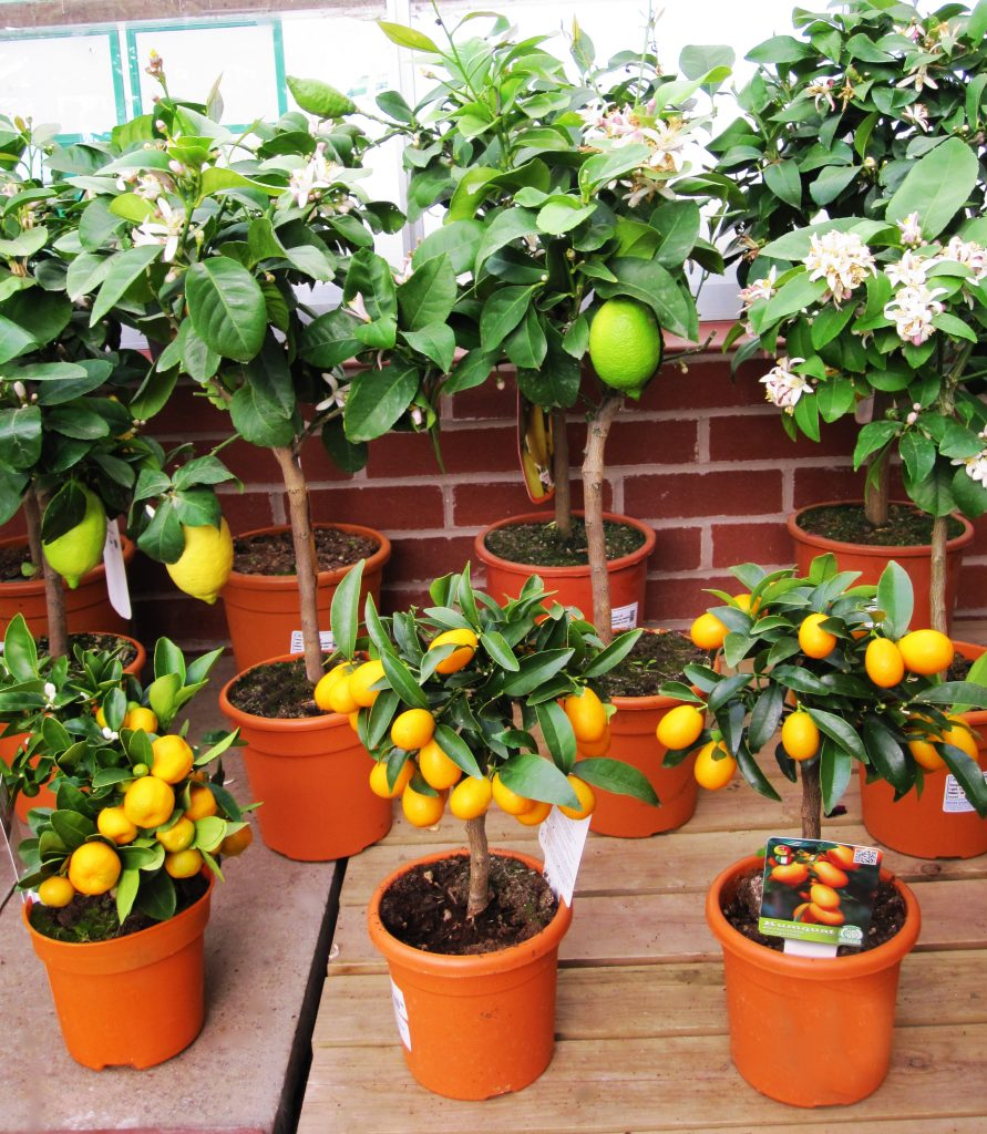 House Plants for Sale at Dean's Garden Centre in York