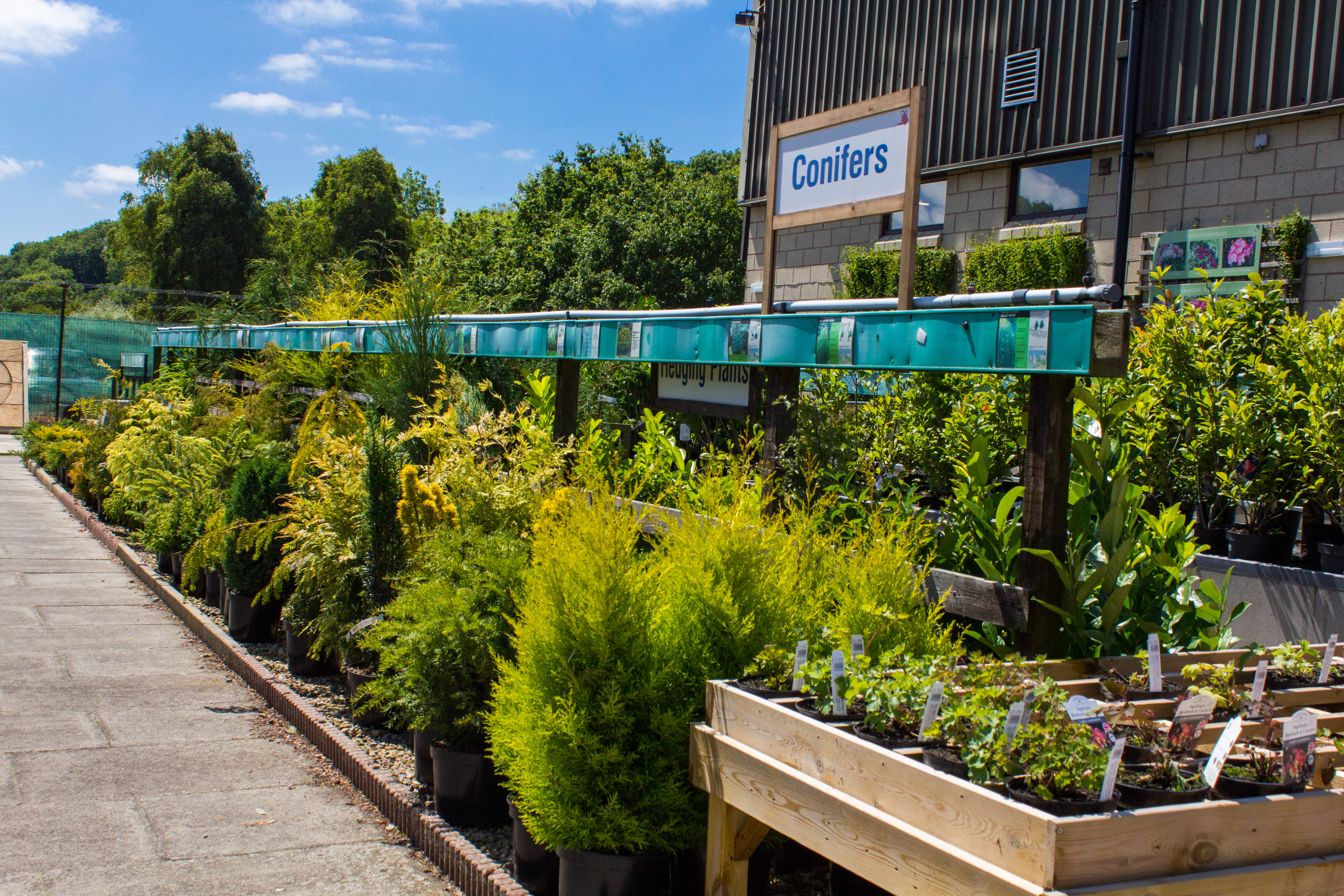 Garden Outdoor Plants for Sale at Dean's Garden Centre in York